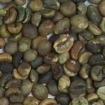 Imagen grano robusta variedad 1 rechazado 001