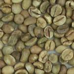 Imagen grano robusta variedad 3 aceptado