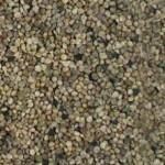 Imagen semilla espinaca descartado