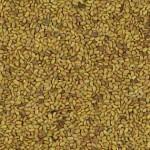 Imagen Semillas de Mielga (alfalfa) Aceptado