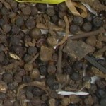 Imagen grano pimienta negra rechazada 001