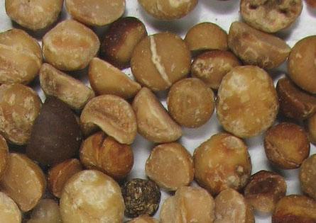Imagen nuez macadamia entera rechazada 003